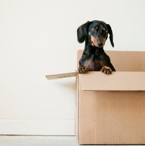 Déménagement : Bien préparer son déménagement avec des professionnels