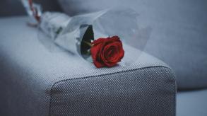 Livraison de roses éternelles pour la Saint Valentin