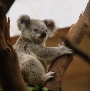 Comment obtenir un visa pour l'Australie sans prise de tête ?