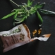 Reconnaitre la qualité d'une fleur CBD